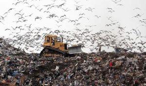 Landfill-382150