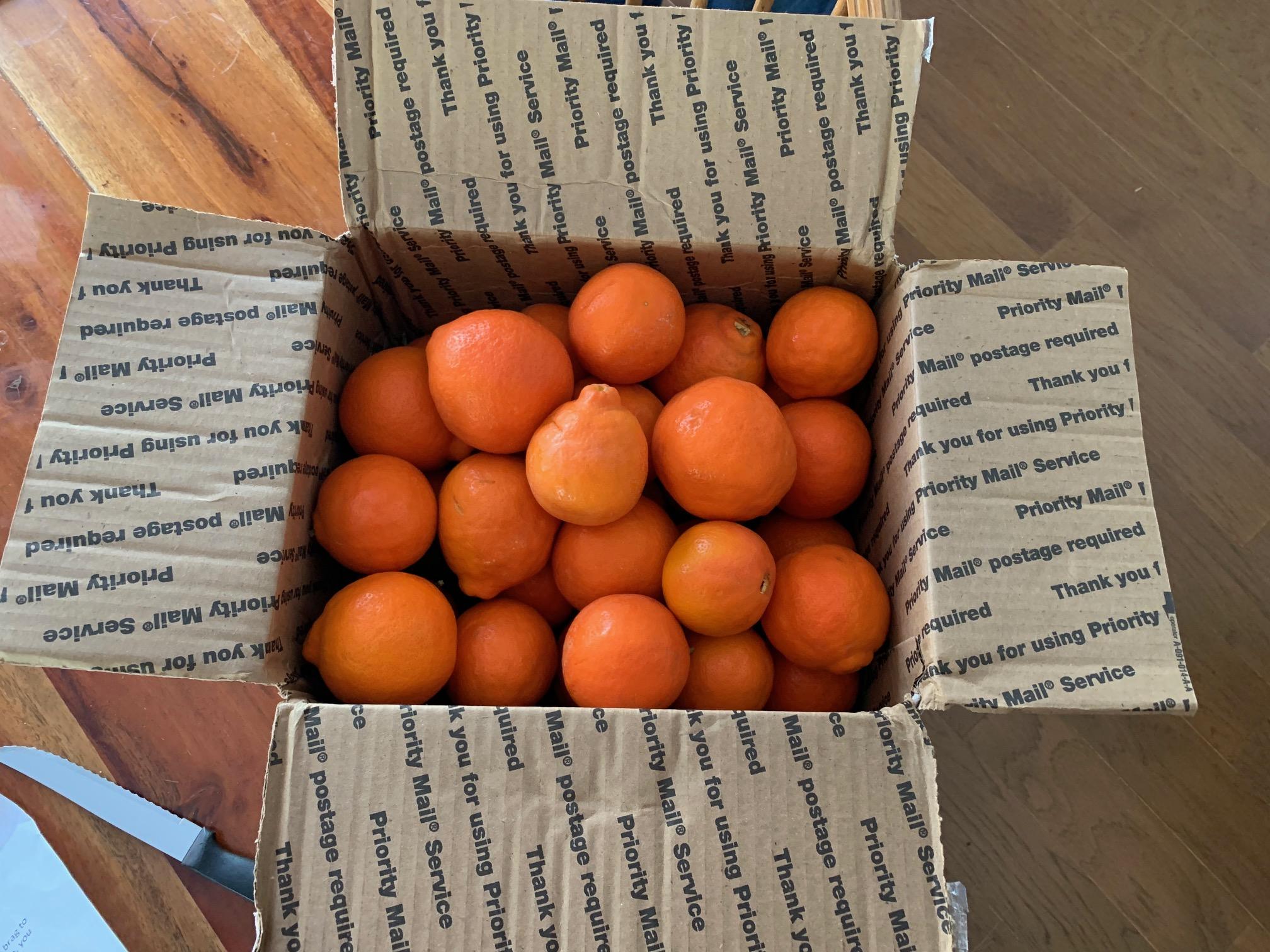 Tangelo Box